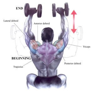 shoulder_press_with_fixed_dumbbells